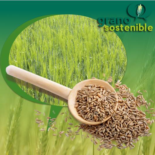 Logo grano sostenible